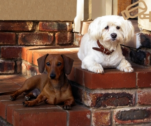 Using CCTV for Pets